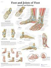 Anatomical Foot and Joint Chart