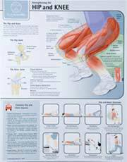 Strengthening the Hip and Knee Chart