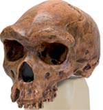 Broken Hill or Kabwe Anthropological Skull