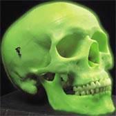 Classic Neon Skull