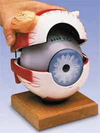 Eyeball w/ Functional Lens Model