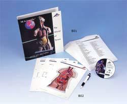 Torso Anatomy Classroom Set