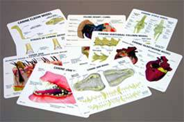 Veterinary Educational Card Set